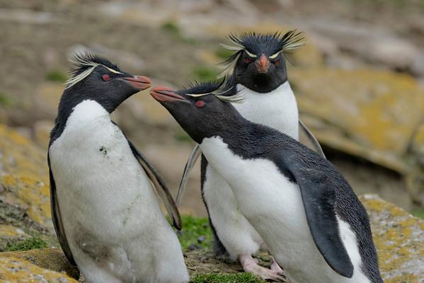 Falklands in Depth 2013