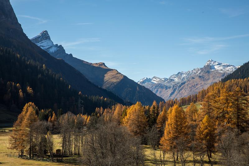 Herbst-im-Rheinwald--25.jpg