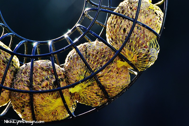 Make Your Own Suet and use a metal wreath hanger to store it.