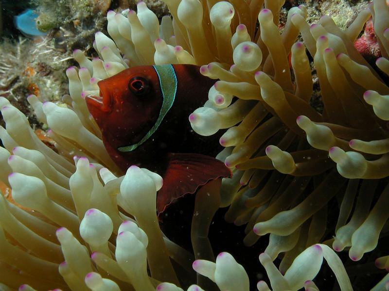 anemone 1.jpg