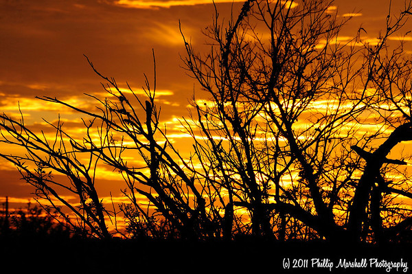 Austin Sunset Jan. 7, 2011