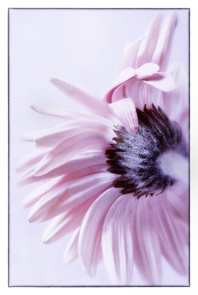 Valentine_Flowers-5.jpg