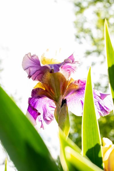 Flowers 5-5 28.jpg