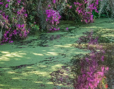 Flowers/Plants from Florida road trip 2016