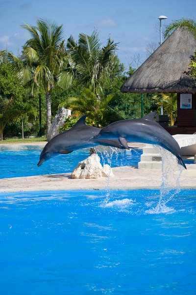 Dolphinaris Cancun 3.jpg