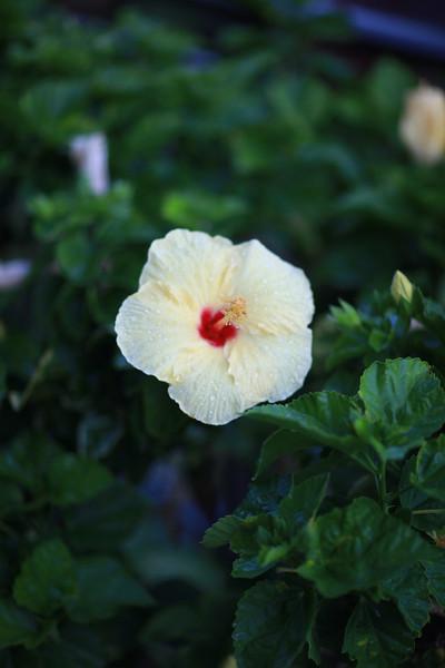 Kauai_D2_AM 119.jpg