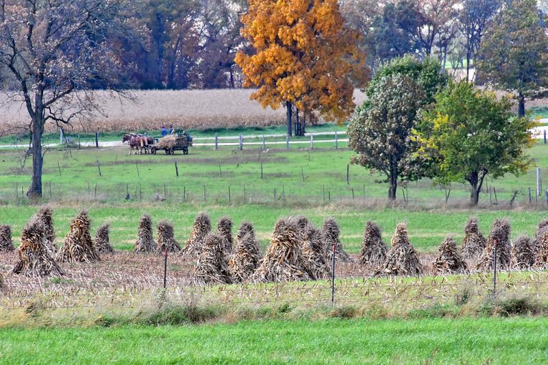 07 Field hay Amish-Dalton WI .jpg