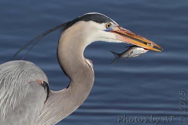 Birding 2015 March
