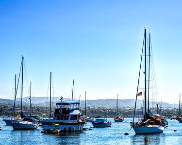Newport Beach Dolphins