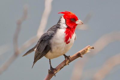 Maui 2011 Birds