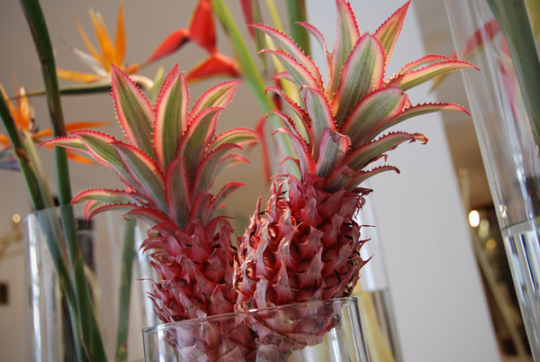 0716 pineapple.JPG