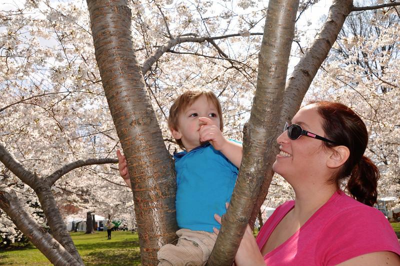 Cherry Blossoms 2014 073.jpg
