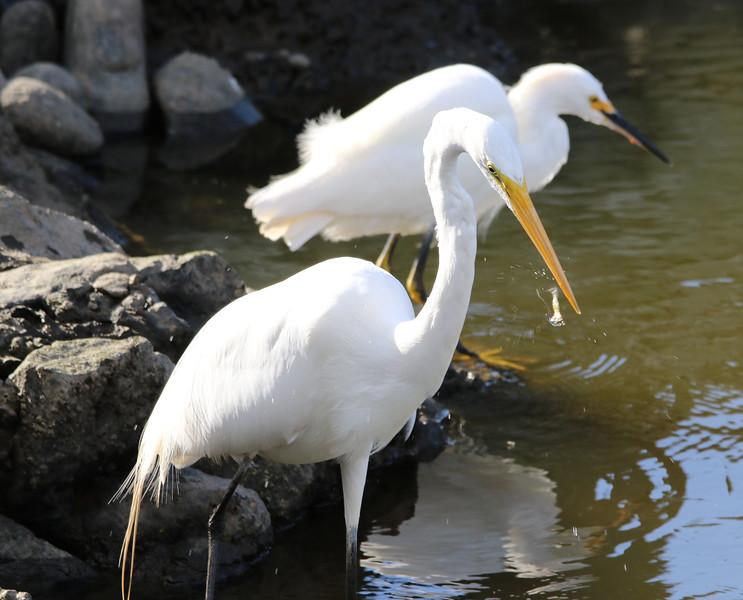 moss land egrets.jpg