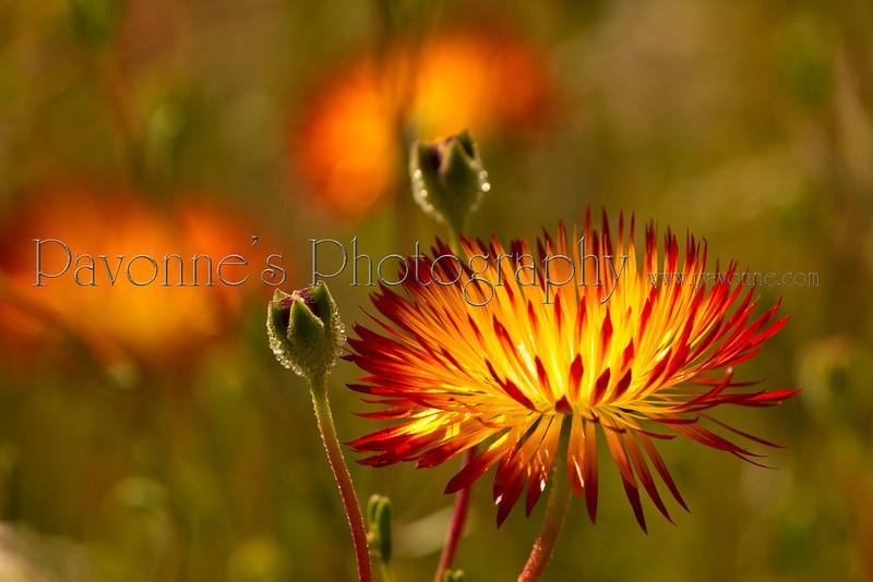 Flower Four.jpg