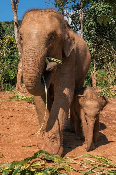 elephant-sanctuary-chiang-mai-8.jpg
