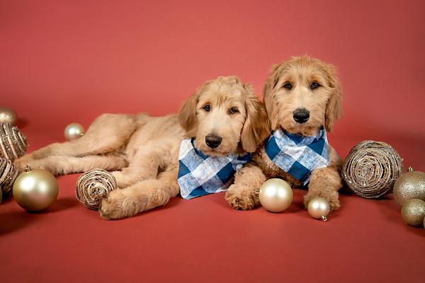 Beau and Bruno
