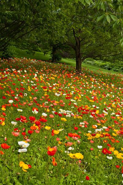 Botanic_Garden13-0587.jpg