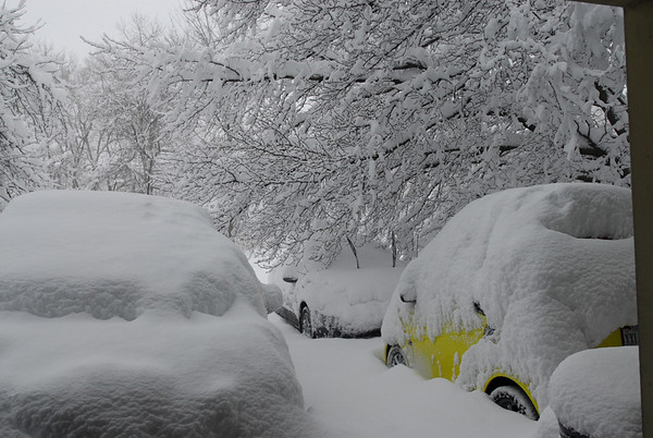 February 2010 Snow