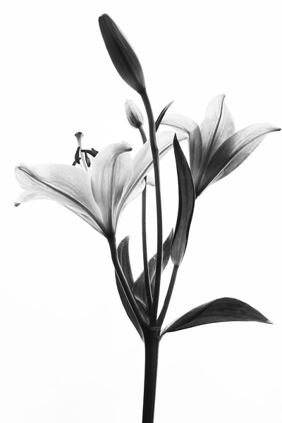 2019 Florals