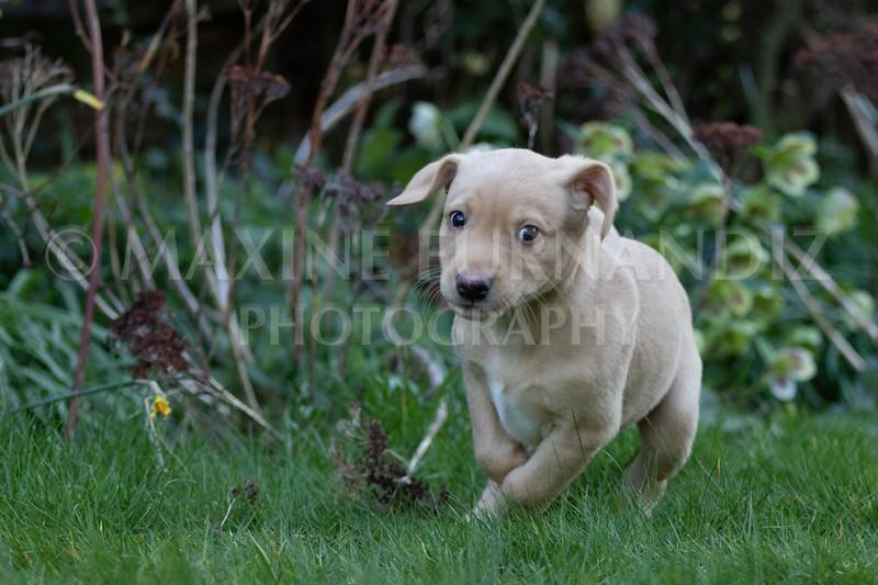 Weika Puppies 24 March 2019-6350.jpg