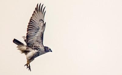 20150120 - Hawk (KG)