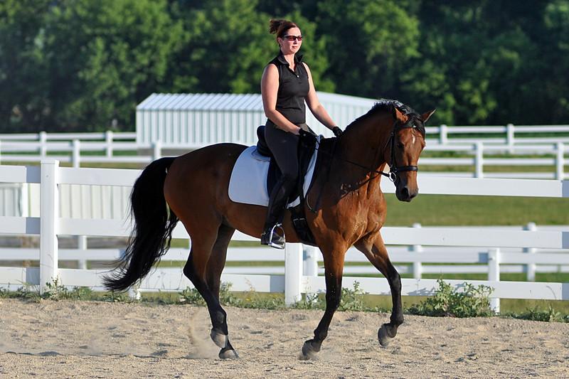 Horses July 2011 399a.jpg