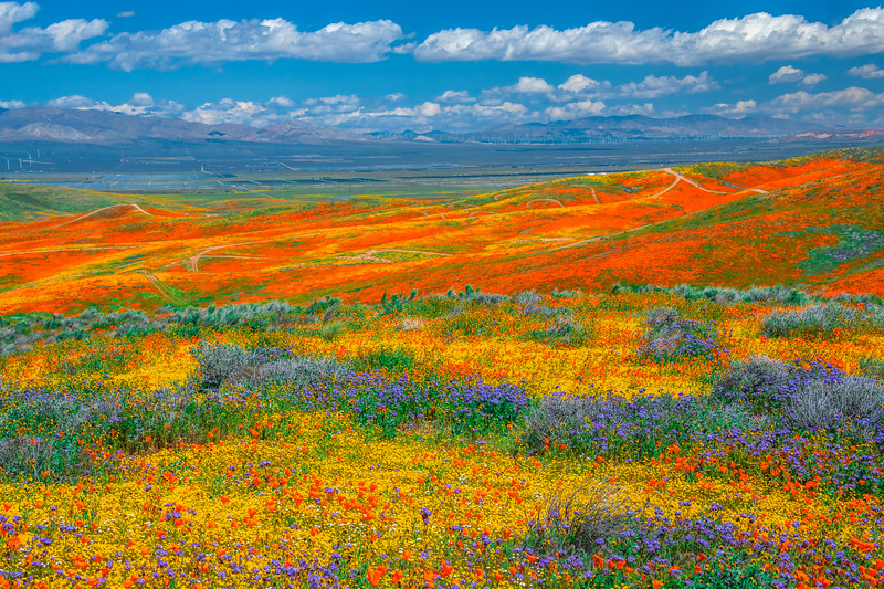 Epic California Superbloom Symphony: Antelope Valley Poppy Reserve Fine Art Landscape Nature Photography