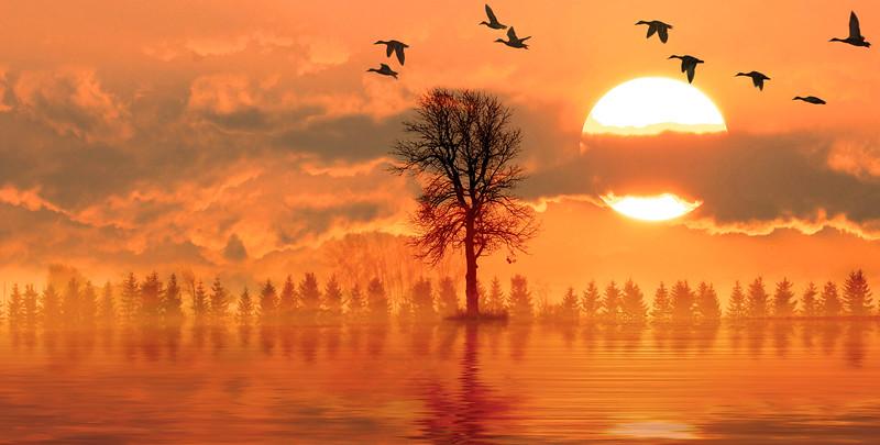 sun-canard8.jpg
