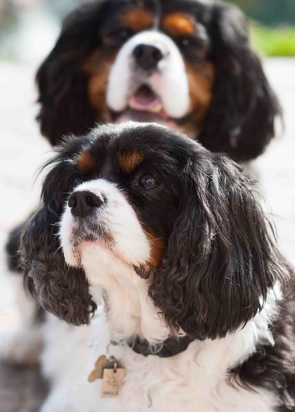 Clifton_Dogs_0044.jpg