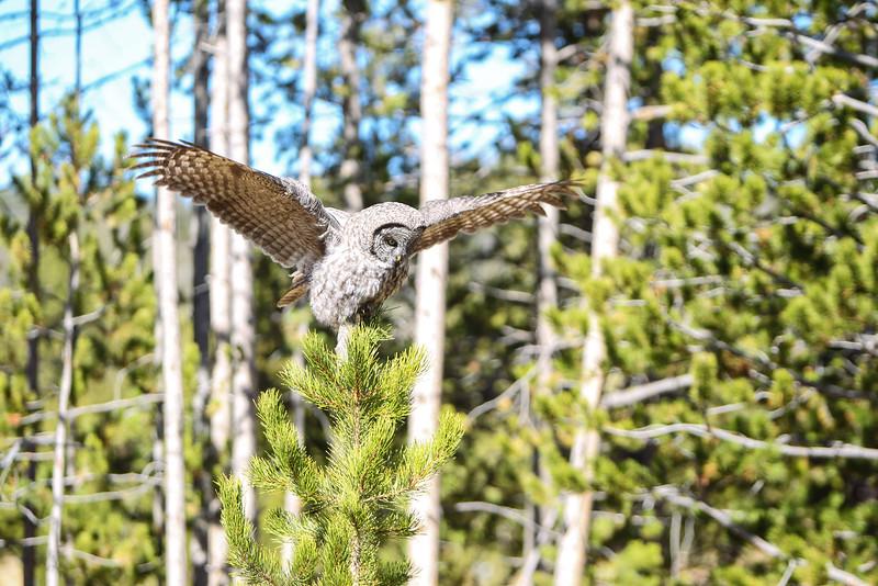 Fall Trip Wyoming & Montana 2016 (105 of 193).jpg
