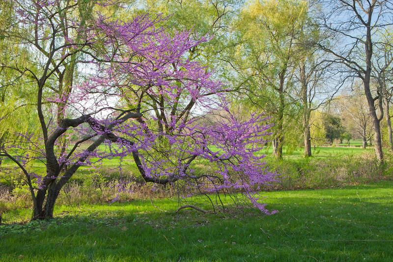 Spring12-1245.jpg