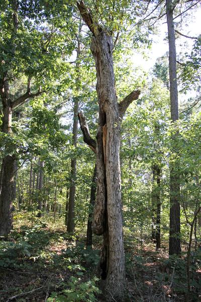 20160918-Ponca Arkansas - Hideout Hollow Trail-21.jpg