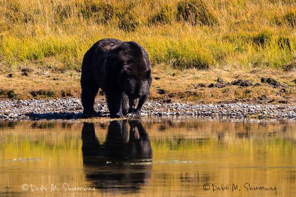 Art in Yellowstone