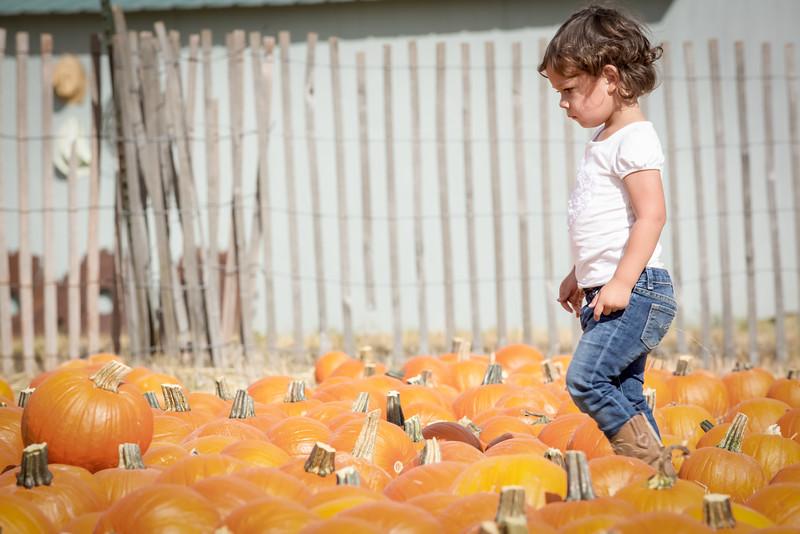 Ava Pumpkin Patch