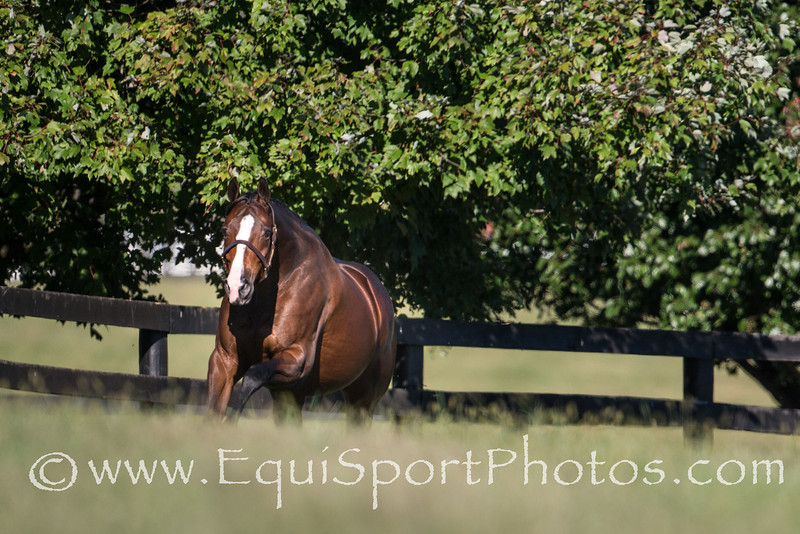 In Lingerie in foal to Frankel at Bluewater Farm on 10.09.2013.