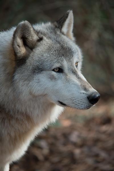 Seacrest Wolves_-83.jpg