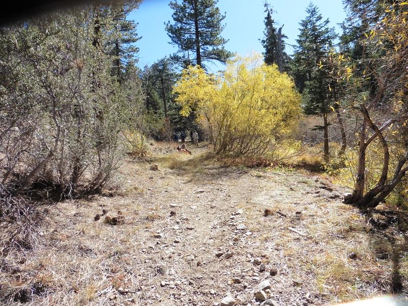 Wilderness Volunteers: 2017 San Bernardino National Forest (California) Service Trip