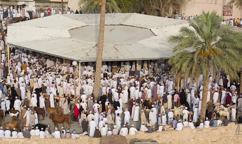 DJI_0018 copy- Oman.jpg
