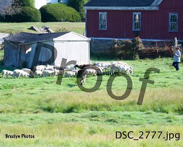 Herding 9/21/19