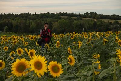 Dayken Farm Sunflower Fields