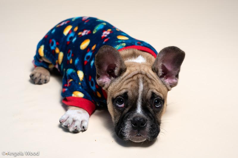 Puppies36.jpg