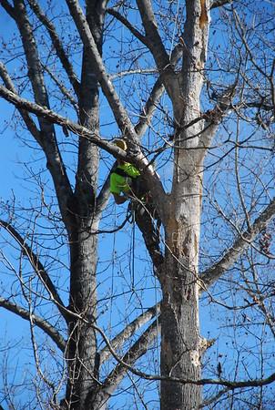 Royce's Tree Service