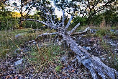 Friedrick Wilderness Park, San Antonio, TX