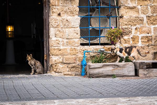 2019-05-06 A Metaphor in Jaffa