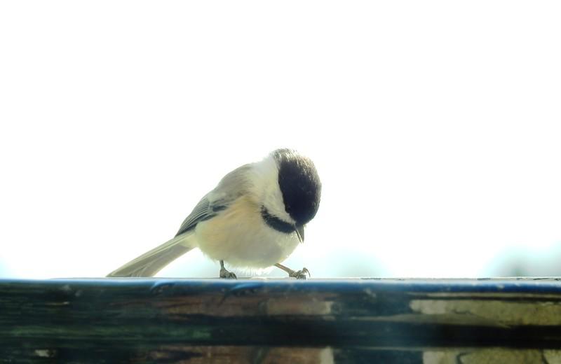 birds (125).JPG