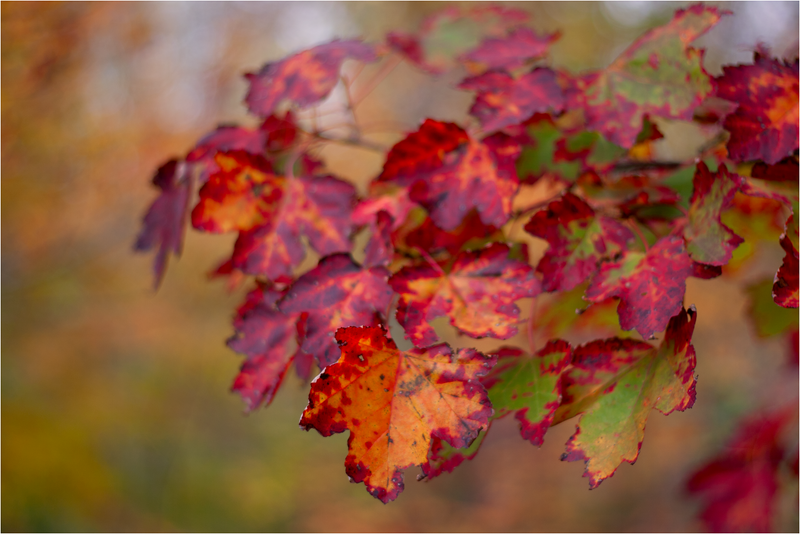 20111019_Autumn06.png