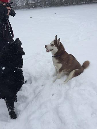 Dog play dates