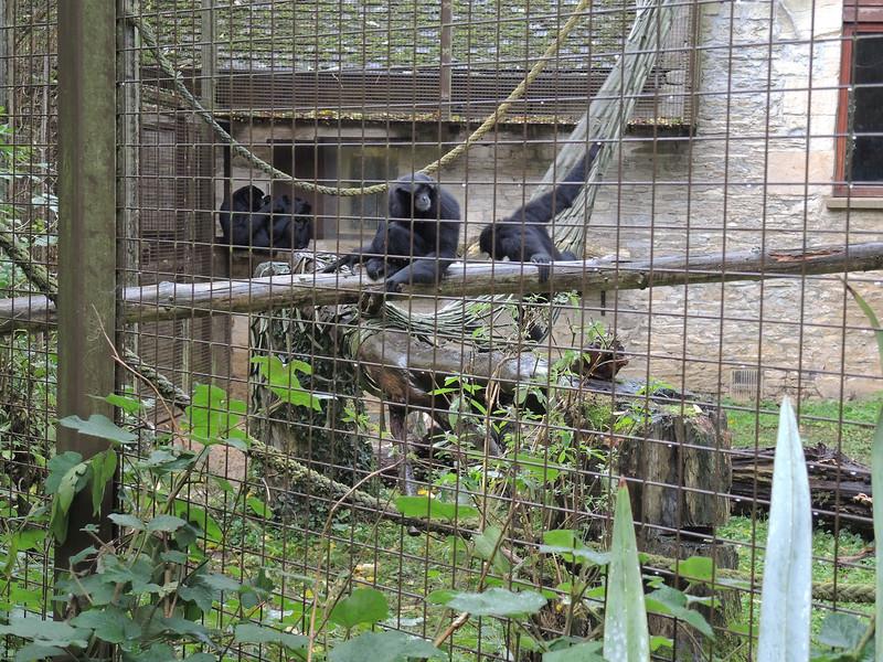 Cotswold Wildlife Park Nov 2013 030.JPG