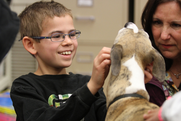 """. Toby Yegian smiles as he scratches under the ears of Ziti, a whippet from the P.A.L.S. program owned by Sharon Tringali, right, in Sylviane Cohn\'s 2nd/3rd grade class at Joaquin Miller Elementary School in Oakland, Calif. on Feb. 15, 2013. Anya Pamplona, a Humane Advocate, brought Larry and invited a dog from the P.A.L.S. program to the class as part of the \""""Drive to Thrive\"""" program. (Laura A. Oda/Staff)"""
