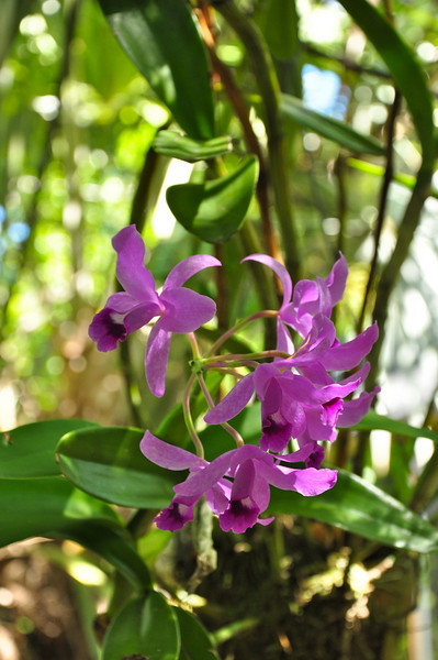 This is one of several orchids I photographed in Sept. 2010 in the yard of the President of the Key West Orchid Society
